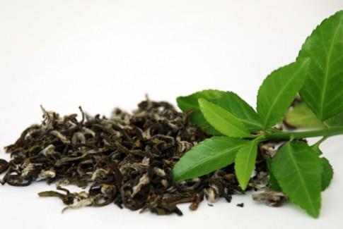 Cách xử lý trà khô bị mốc