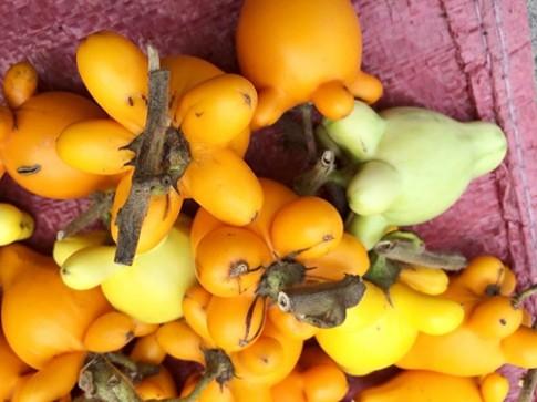 Cảnh báo trái dư cực độc nằm ngày trên mâm ngũ quả ngày Tết