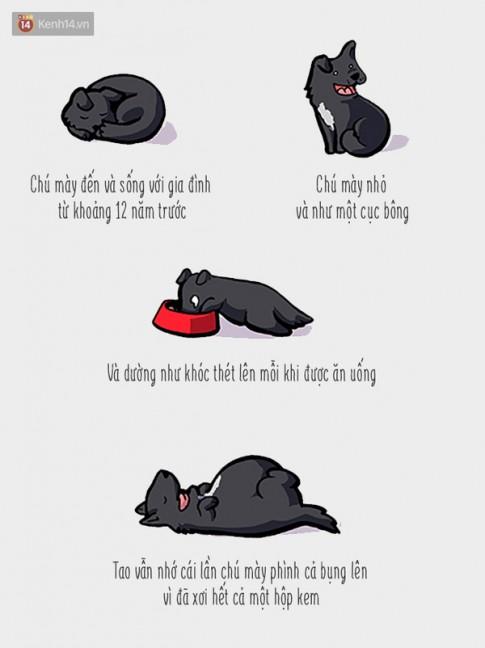 """Câu chuyện về """"Chú chó không bao giờ nằm yên một chỗ"""" sẽ khiến bạn bật khóc"""