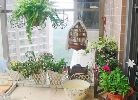 Cây xanh cho nhà chung cư