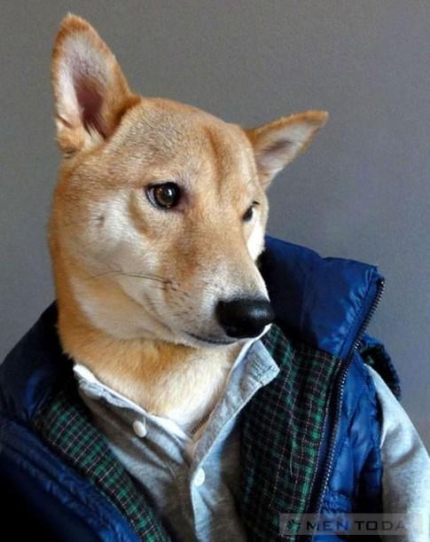 Chú chó thời trang nhất thế giới mạng