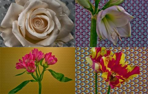 Chụp gần 10.000 ảnh để xem quá trình nở của 21 loại hoa