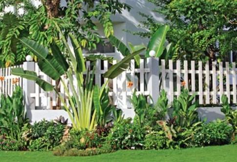 Cổng rào trắng