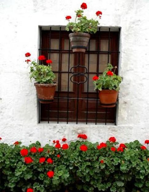 Cửa sổ đẹp nhờ hoa