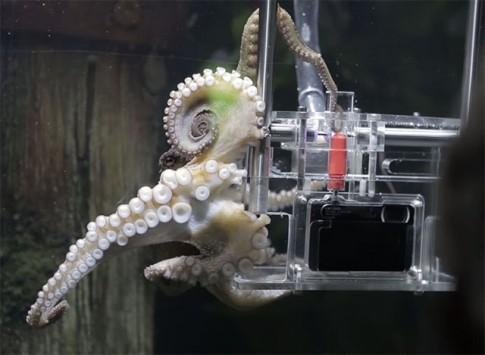 Đây là chú bạch tuộc đã được Sony huấn luyện thành photographer