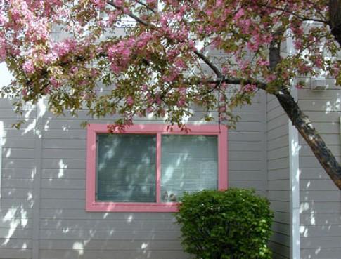 Làm đẹp cửa sổ với đồ trang trí đơn giản