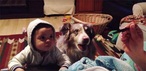Mẹ dạy bé tập nói nhưng chú cún thành thục trước