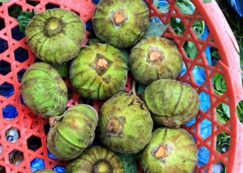 Ngọt vị vả trộn tôm miền Trung