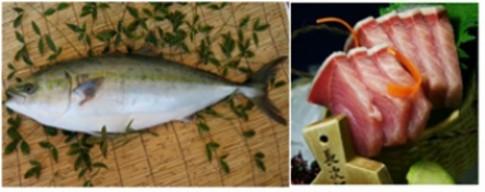 Thưởng thức Sashimi cá cam Nhật Bản