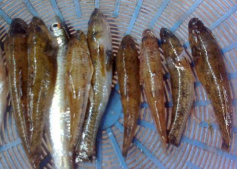 Vị ngon từ cá bống suối