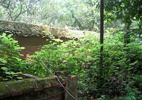 Vườn trang trại phong cách tự nhiên
