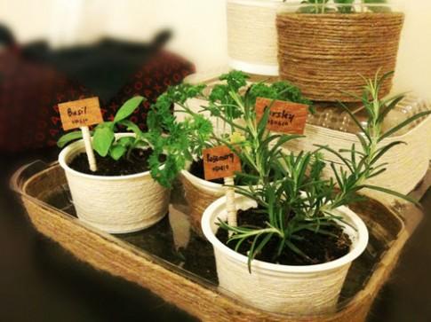 3 loại rau củ dễ trồng tại nhà