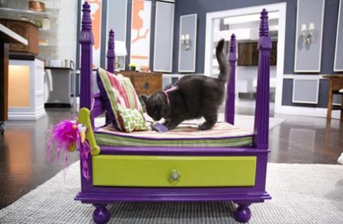 7 cách tự chế giường cho thú cưng