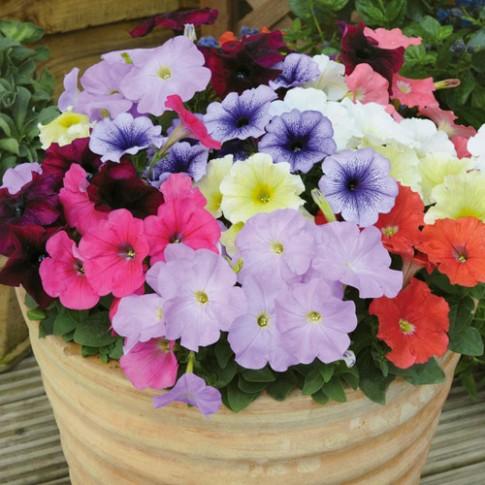 Các loài hoa nên trồng vào mùa hè