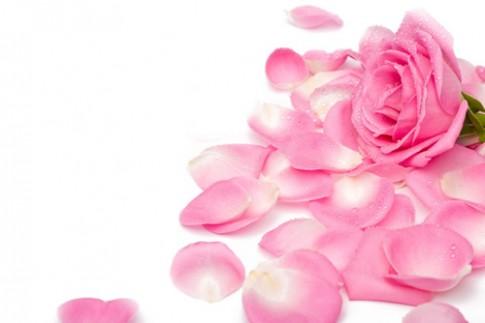 Da trắng mềm nhờ mặt nạ cánh hồng