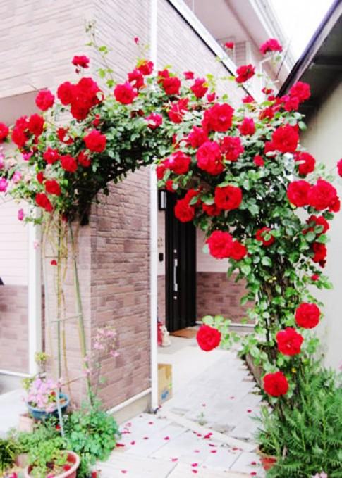 Hàng rào nhà 'duyên dáng' nhờ hoa