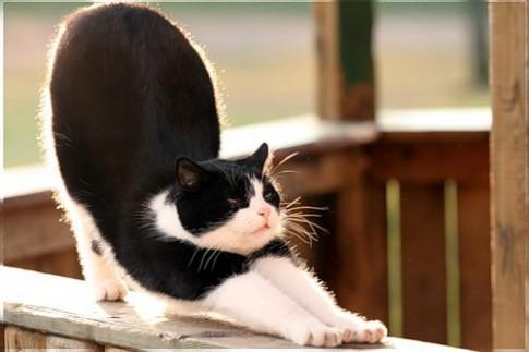 Học cách làm đẹp từ loài mèo