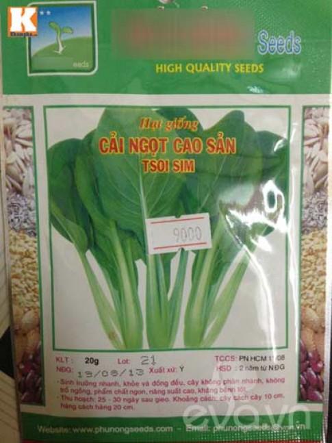 Mẹ Việt 'sốt' trồng rau mầm không cần đất