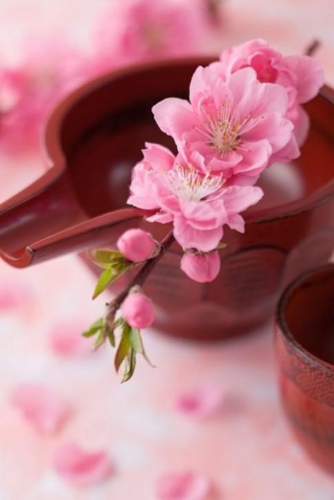 Ngày Tết, tận dụng hoa xuân làm mặt nạ dưỡng da