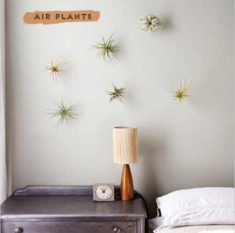 """Nhà đẹp lạ nhờ """"cây không khí"""""""