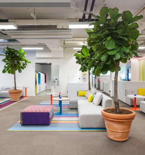 Văn phòng địa ốc ngập tràn màu sắc