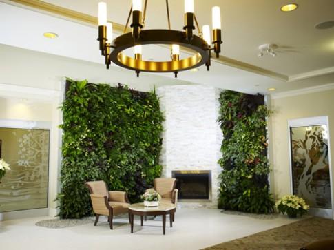 Vườn đứng: Giúp nhà đẹp lại lợi sức khỏe