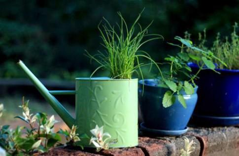 10 cách táo bạo trồng vườn hoa xinh lung linh