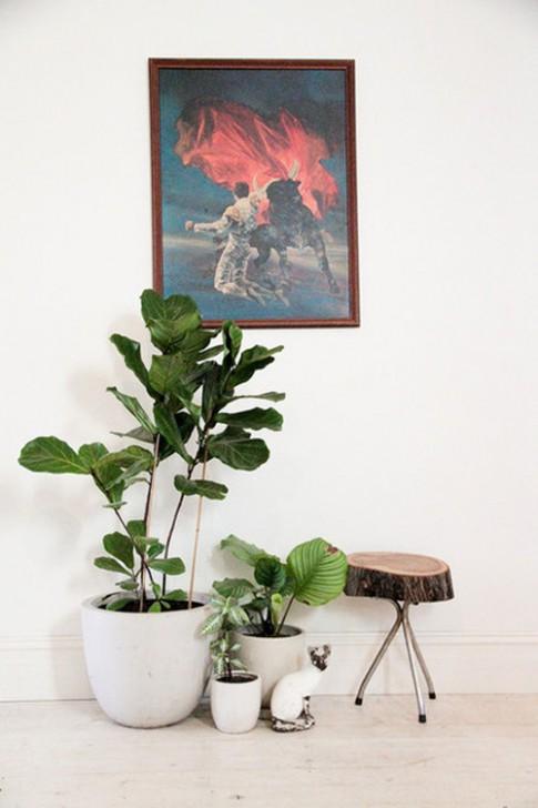 10 cây xanh tươi tắn, dễ sống trong nhà