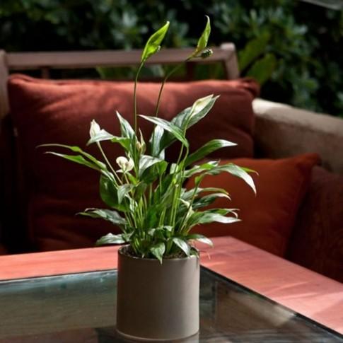 10 loại cây cảnh dễ trồng trong nhà