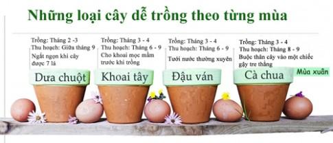 12 loại rau củ thích hợp trồng theo mùa