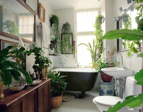 5 cây cảnh đẹp, dễ chăm cho phòng tắm