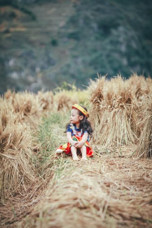 """""""Bản sao nhí Chi Pu"""" đẹp ngẩn ngơ giữa mùa vàng Tây Bắc"""