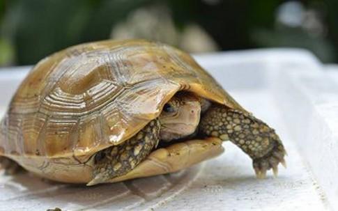 Bày Rùa kích thích tài lộc, may mắn