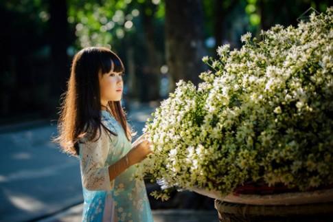 Bé gái Hà Nội đẹp mong manh trong mùa cúc họa mi