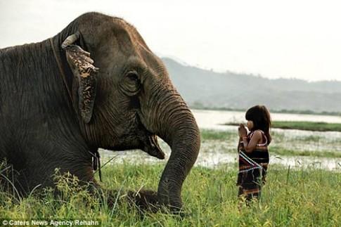 Bé gái Việt 6 tuổi huấn luyện voi lên báo Anh