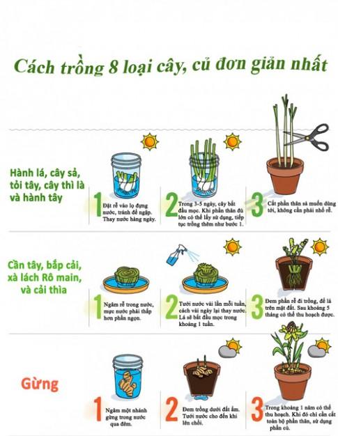 Bí kíp trồng 8 loại rau củ dễ tìm, sẵn có
