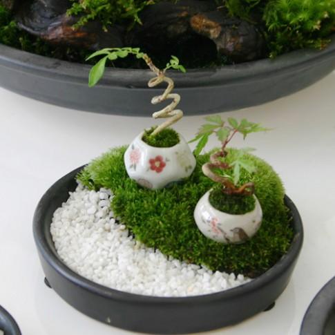 Bonsai siêu nhỏ 3cm dễ thương cho bàn trà