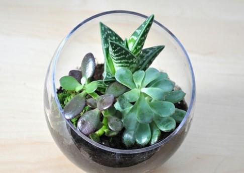 Các cách đơn giản để trồng bình cây mini