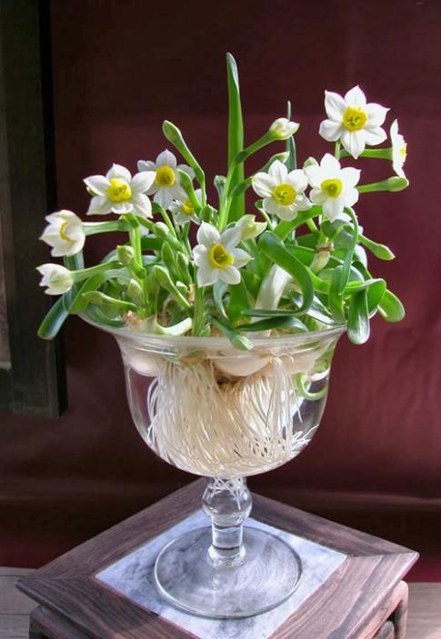 Chị em rộn ràng trồng hoa kịp bung nở tươi tắn ngày đầu năm