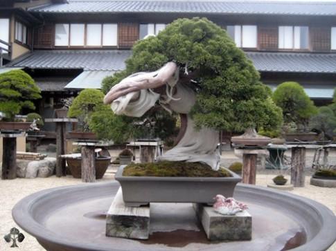 Chiêm ngưỡng mẫu bonsai đẹp nhất thế giới