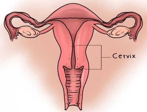 Dù chưa từng nhìn thấy cổ tử cung, nhưng đây là 10 điều bạn cần biết