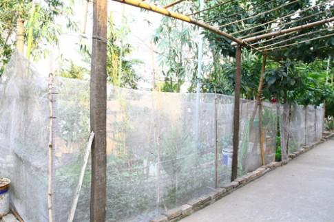 Gia đình trí thức sửa bãi hoang làm vườn rau ngọt mát