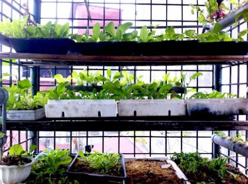 Hà Nội: Mẹ quyết tâm trồng rau sạch nuôi con ăn dặm