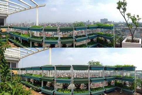 Hà Nội: Phát thèm vườn rau tầng 10 nhìn ra hồ lộng gió