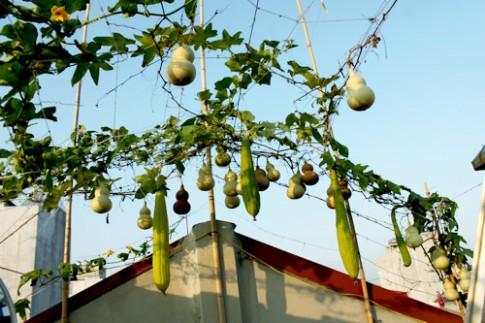 Hà Nội: Vườn hồ lô sân thượng hiếm có trên phố Bạch Mai