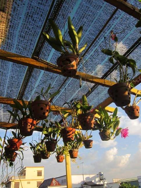 Hàng trăm giò hoa núi rừng khoe sắc thắm giữa lòng TP.HCM