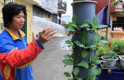 Họa sĩ tự do hướng dẫn trồng cây tại gia trong ống nước