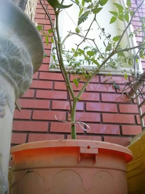 Huy động xô nứt, nồi thủng, mũ hỏng để... trồng rau trên lan can