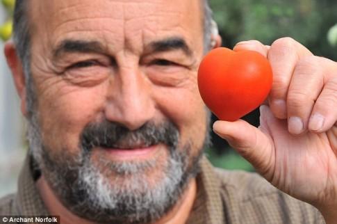 Khi những người đàn ông trồng cà chua ngọt ngào