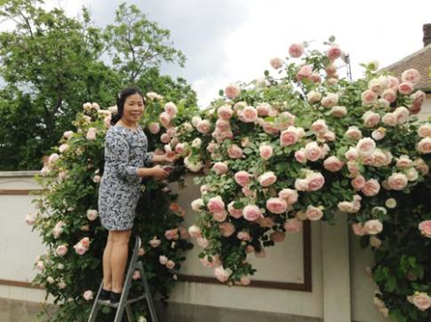 Khu vườn đầy hoa và nắng của người phụ nữ Huế ở Hungary